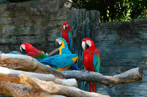 http://www.globaltravelmate.com/uploads/images/cambodia/koh_kong/koh_kong_todo_safari_world_2.jpg