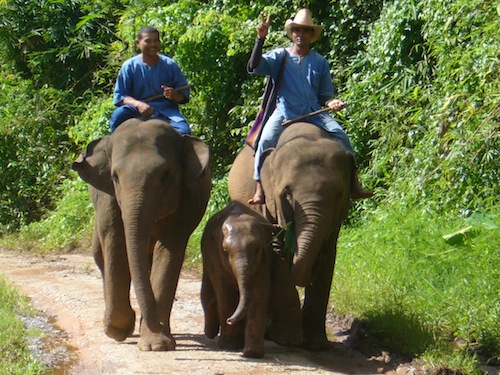 Elephant Camp in Chiang Rai