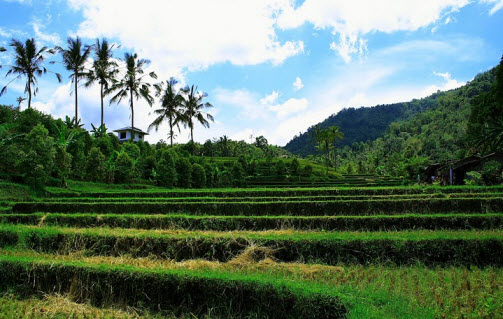 Rice terraces on Bali Island in Indonesia - Trip advice and travel info - Free World Travel Guide