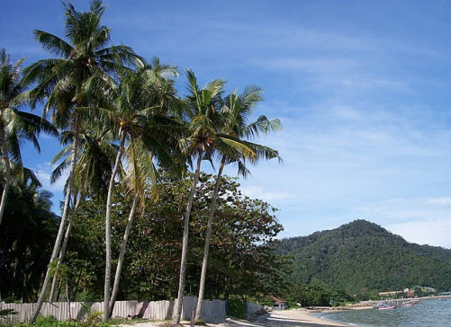 Penang Teluk Beach nice palms and sand in Malaysia