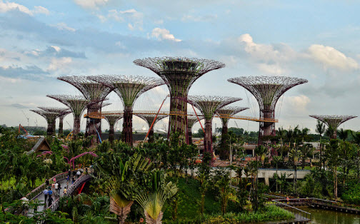 the supertree grove at gardens by the bay singapore