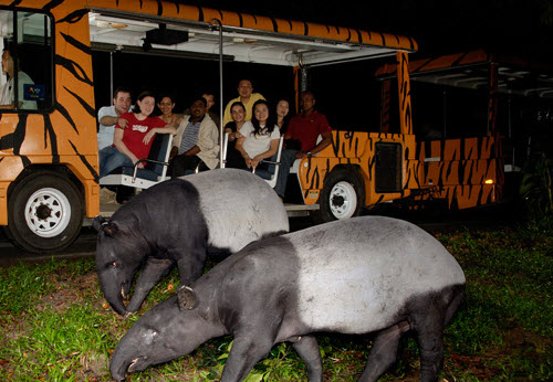 singapore night safari and zoo to do guide. Black Bedroom Furniture Sets. Home Design Ideas