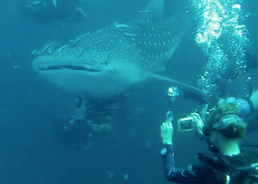 Diving in the kho tao diveshops dive guide - Ko tao dive resort ...