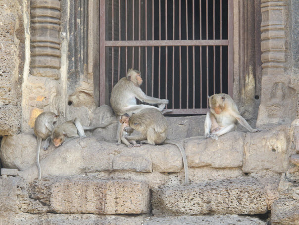 Monkeys at the temple in Lopburi