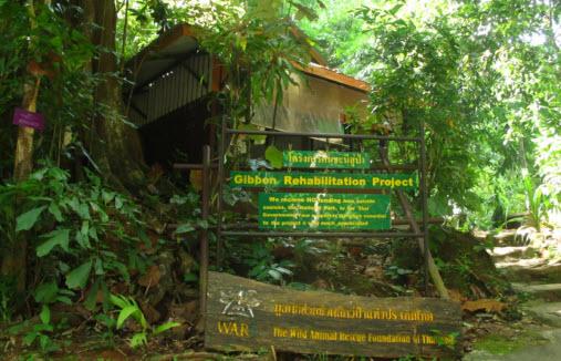 Gibbon Rehabilitation Project in Phuket Island Thailand